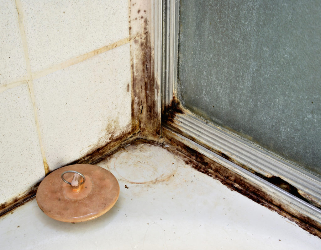 Dealing with Bathroom Mold