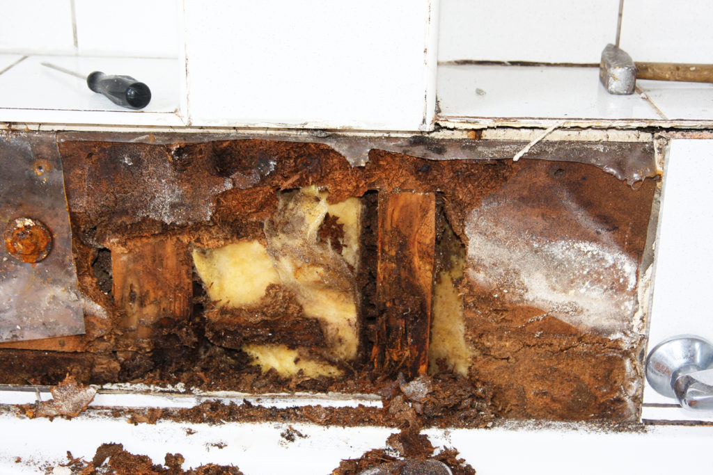 Water Damage? Get a Mold Inspection in Worcester | Microzyme