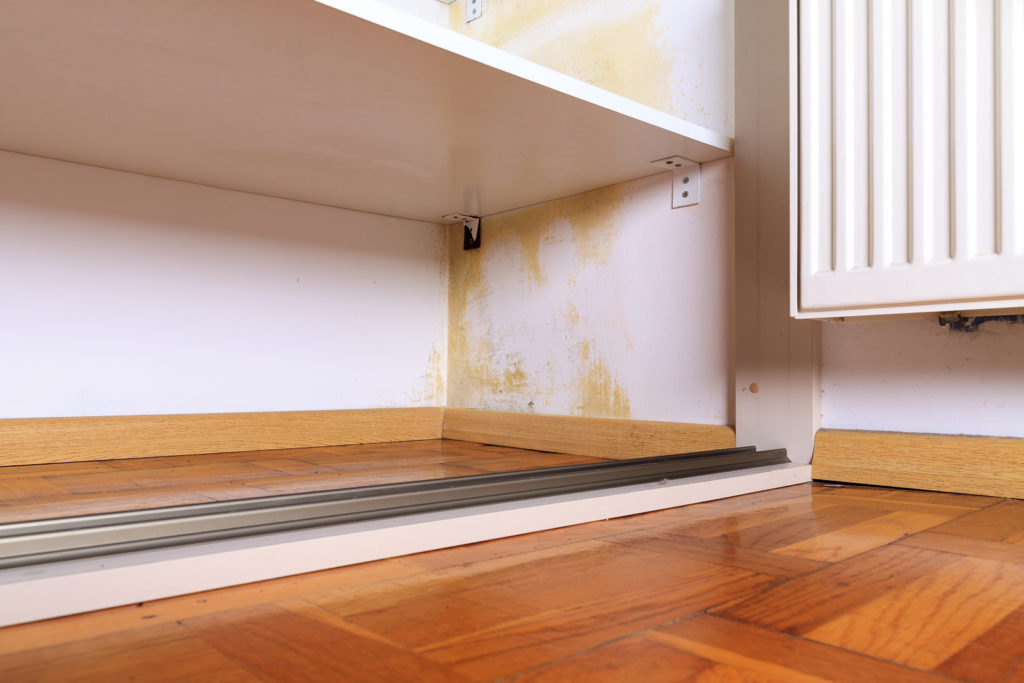 How to Remove Black Mold From Your Worcester MA Home | Microzyme
