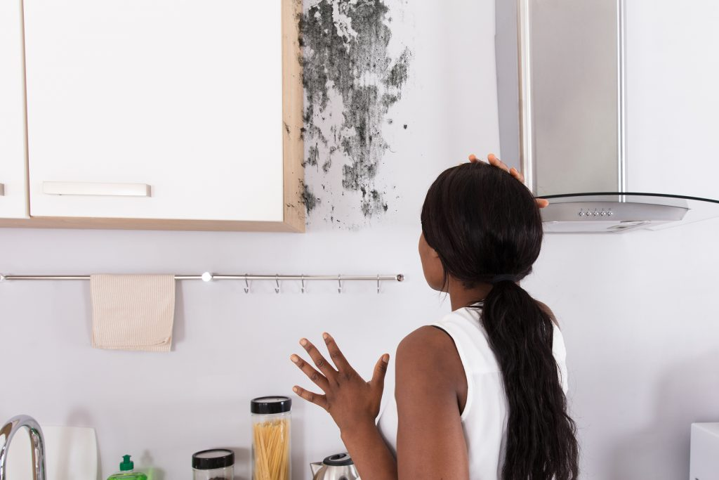 A mold damage assessment can help keep you healthy