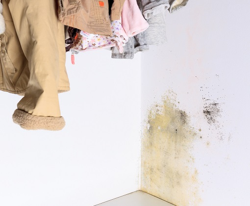 Mold Removal Cost Worcester MA | Microzyme