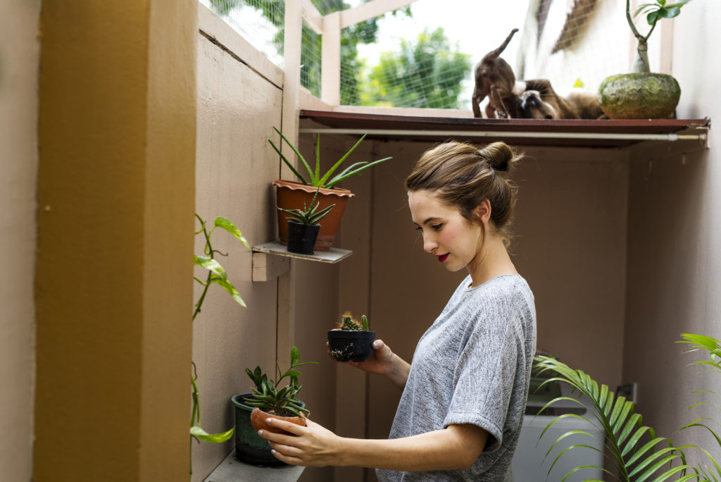 Mold and Your Home's Plants