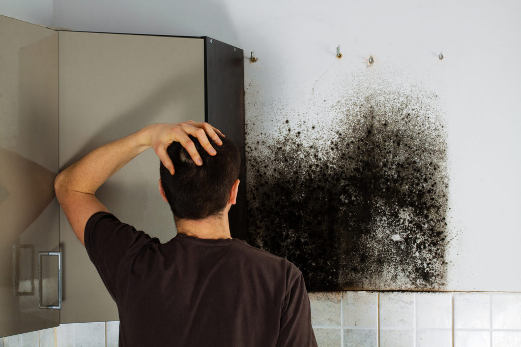 Mold Removal and Tenant Rights